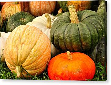 Pumpkin Pleasure Canvas Print by Gene Sherrill