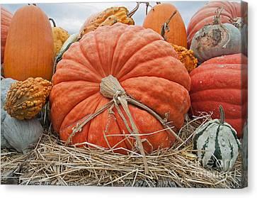 Pumpkin Times Canvas Print by Minnie Lippiatt