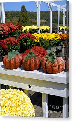 Pumpkins And Fall Flowers Canvas Print by Amy Cicconi