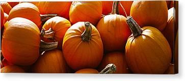 Pumpkins, Half Moon Bay, California, Usa Canvas Print by Panoramic Images