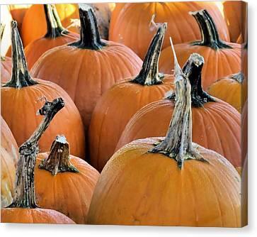 Pumpkins Canvas Print by Janice Drew