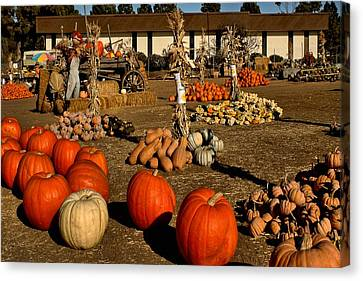 Canvas Print featuring the photograph Pumpkins by Michael Gordon