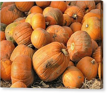 Pumpkins Canvas Print by Ron Harpham
