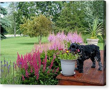 Canvas Print featuring the photograph Pup And Flowers by Elaine Franklin