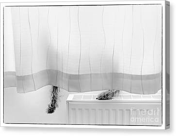 Pup Behind The Curtain Canvas Print by Natalie Kinnear