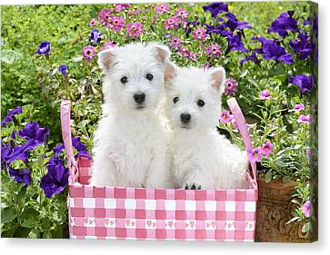 Puppies In A Pink Basket Canvas Print by Greg Cuddiford