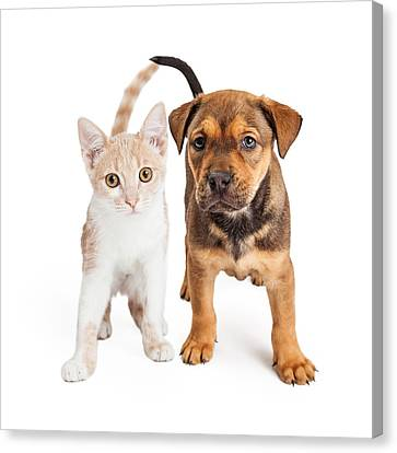 Puppy And Kitten Standing Together Canvas Print by Susan Schmitz