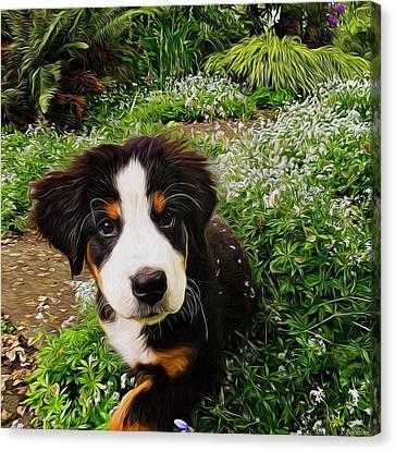 Puppy Art - Little Lily Canvas Print by Jordan Blackstone