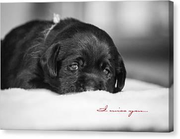 Puppy Black Lab  Canvas Print by Toni Thomas