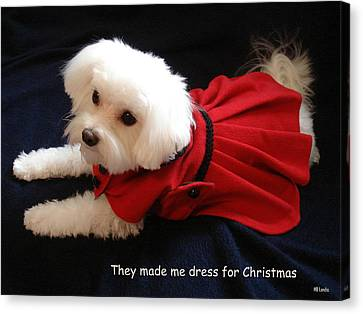 Canvas Print featuring the photograph Puppy Coat by Mary Beth Landis