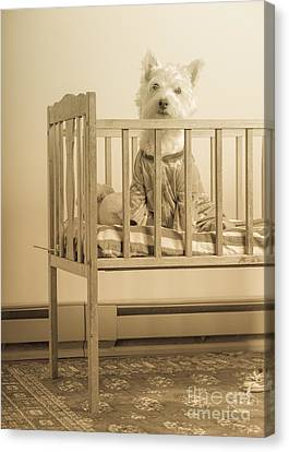 Puppy Dog In A Baby Crib Canvas Print by Edward Fielding
