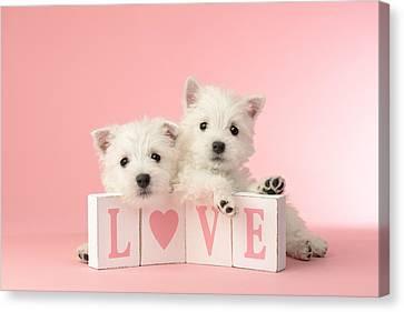 Puppy Love Canvas Print by Greg Cuddiford