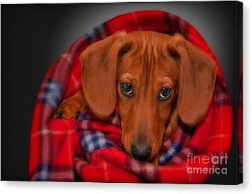Puppy Love Canvas Print by Susan Candelario