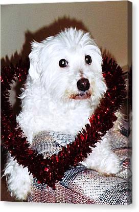 Puppy Love Valentine Canvas Print by Eddie Eastwood
