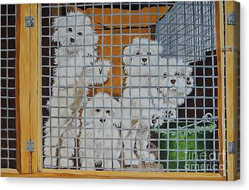 puppy mill Maltese Canvas Print by Laura Bolle