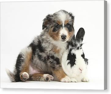 Puppy With Rabbit Canvas Print