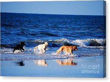 Pups On The Beach Canvas Print by Linda Mesibov