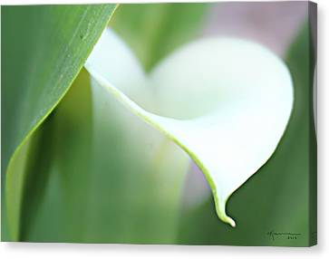 Pure Heart Canvas Print by Kume Bryant