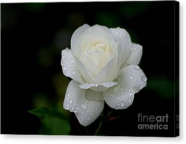 Pure Heaven Canvas Print by Living Color Photography Lorraine Lynch