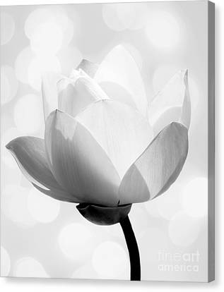 Pure Canvas Print