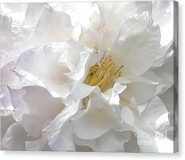 Pure White Canvas Print