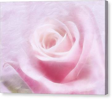 Purity And The Pink Rose Canvas Print by Georgiana Romanovna