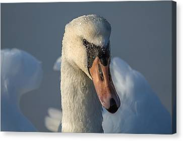 Canvas Print featuring the photograph Purity In The Eyes by Rose-Maries Pictures