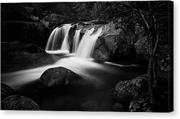 Purity Canvas Print by Mark Lucey