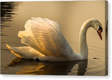 Purity Of The Soul Canvas Print by Rose-Maries Pictures