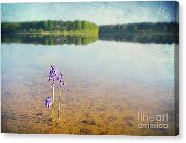 Purity Canvas Print by Svetlana Sewell
