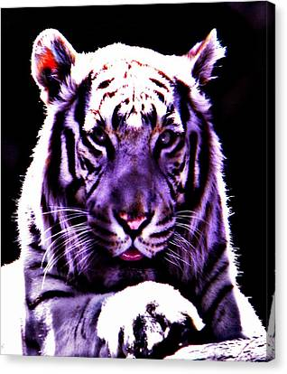 Purle Tiger Canvas Print