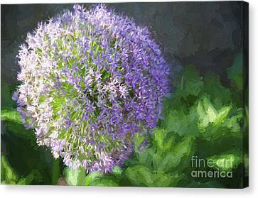 Purple Allium 1 Hollandicum Sensation  Canvas Print by Andee Design