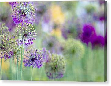 Alliums Canvas Print - Purple Allium by Rebecca Cozart