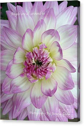 Canvas Print featuring the photograph Purple And Cream Dahlia by Jeannie Rhode
