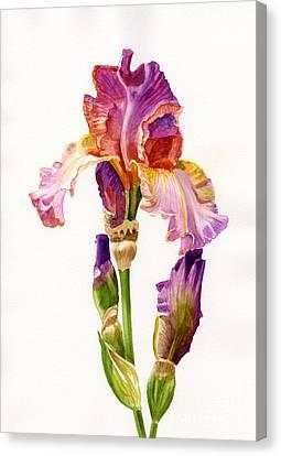 Purple And Orange Iris Canvas Print by Sharon Freeman