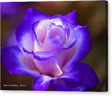 Purple And Pink Rose Canvas Print by Bruce Nutting
