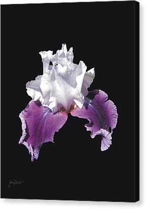 Purple And White Bearded Iris Canvas Print