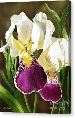 Purple And White Iris Canvas Print by Joan A Hamilton