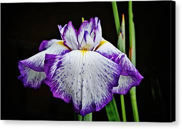 Purple And White Iris Canvas Print by Linda Brown
