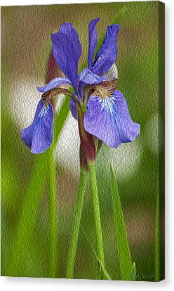 Purple Bearded Iris Oil Canvas Print