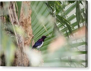 Purple Birs In Trees Canvas Print