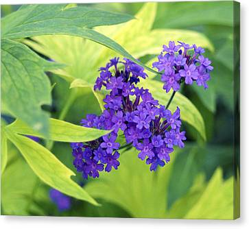 Canvas Print featuring the photograph Purple Bunch  by Haleh Mahbod