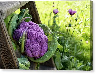 Purple Cauliflower Canvas Print by Aberration Films Ltd