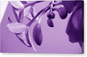 Purple Charm Canvas Print