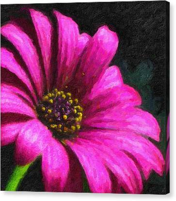 Purple Canvas Print by Chuck Mountain