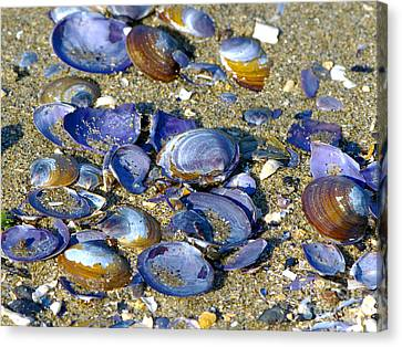 Purple Clam Shells On A Beach Canvas Print