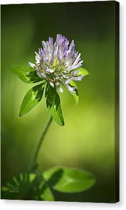 Purple Clover Flower Canvas Print by Christina Rollo