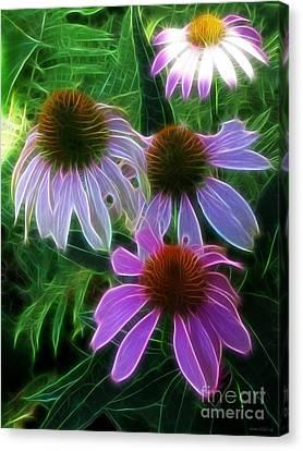 Purple Coneflower Echinacea Canvas Print