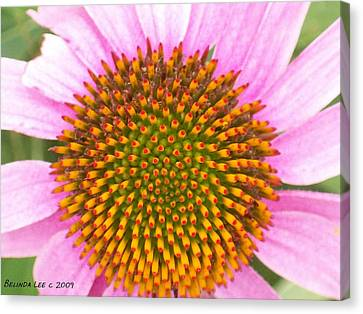 Canvas Print featuring the photograph Purple Conehead Closeup by Belinda Lee