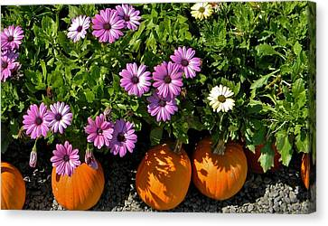 Purple Daisies And A Touch Of Orange Canvas Print by Jean Goodwin Brooks